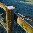 P1020599_frosty_fence