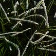 P1020617_frosty_grass