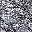 P1020645_snowy_branches