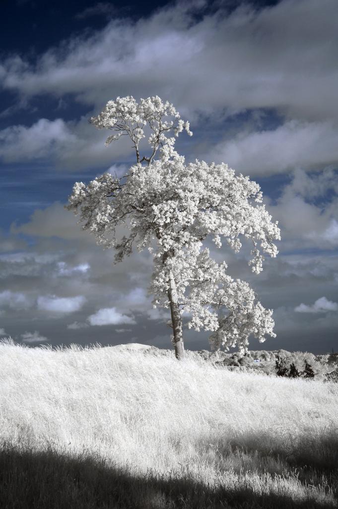 DSC_1283-single-tree-castle-hill-Kendal-web